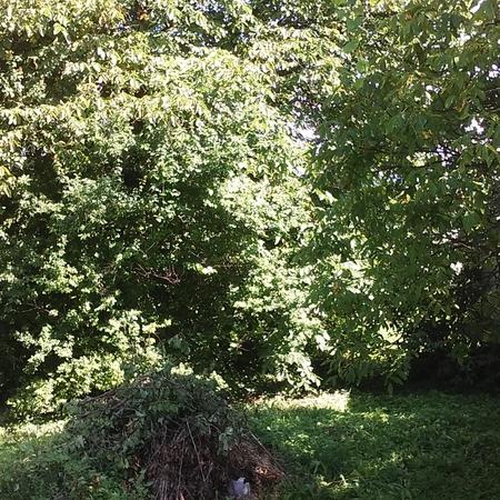 Eladó  telek (Pest megye, Zsámbék, Jóvilág u. ) 7,5 M  Ft
