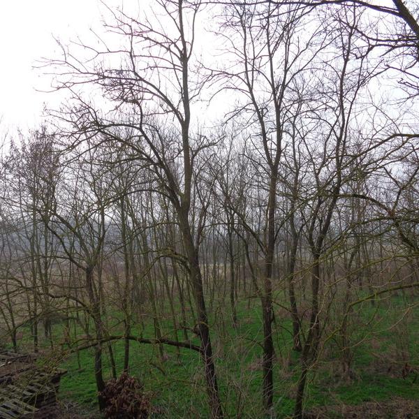 Eladó  mezőgazdasági ingatlan (Somogy megye, Főnyed, külterület ) 12,5 M  Ft
