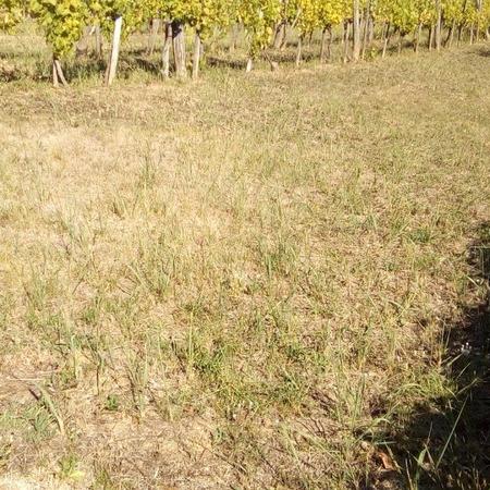 Eladó  telek (Zala megye, Zalaegerszeg) 7,99 M  Ft