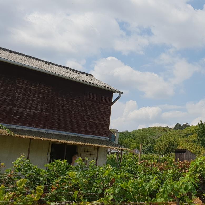 Eladó  telek (Pest megye, Zsámbék, Romtemplom) 10,5 M  Ft