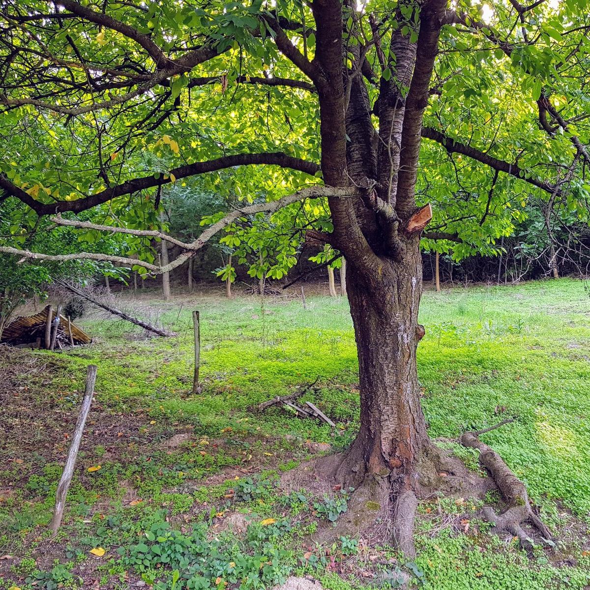 Eladó  nyaraló (Fejér megye, Adony, Éleshegyi) 1,99 M  Ft