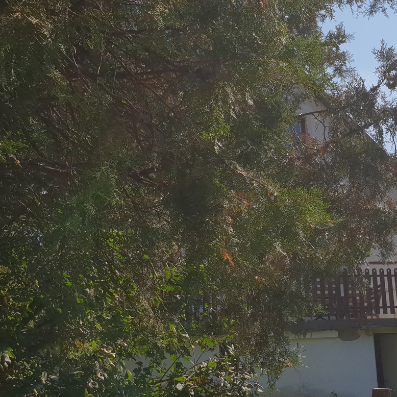 Eladó  családi ház (Pest megye, Budakeszi) 57,9 M  Ft