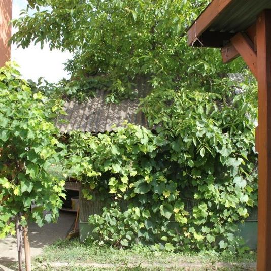 Eladó  családi ház (Pest megye, Szigetszentmiklós) 33,9 M  Ft