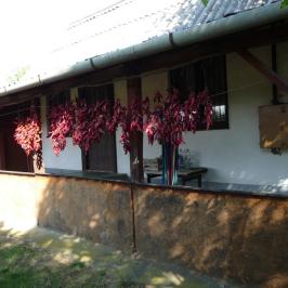 Eladó  telek (Nyíregyháza, Nyírszőlős) 5,5 M  Ft