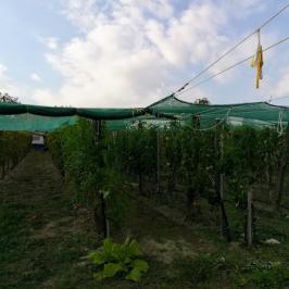 Eladó  mezőgazdasági ingatlan (Tök) 17,8 M  Ft
