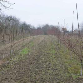 Eladó  mezőgazdasági ingatlan (Pilis) 2,5 M  Ft