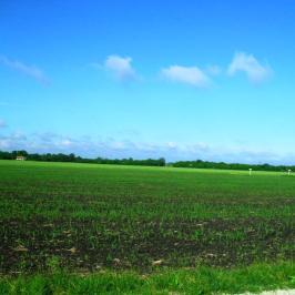 Eladó  mezőgazdasági ingatlan (Délegyháza) 30 M  Ft