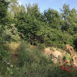 Eladó  telek (Szigetszentmiklós, Kavicsbánya) 2,5 M  Ft