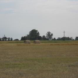 Eladó  mezőgazdasági ingatlan (Kunszentmiklós) 80 M  Ft