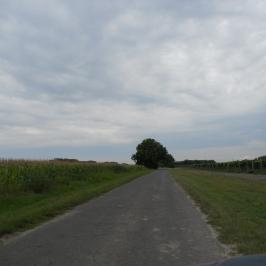 Eladó  mezőgazdasági ingatlan (Dömsöd) 20 M  Ft