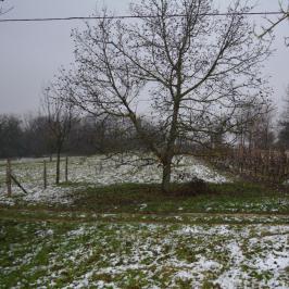 Eladó  mezőgazdasági ingatlan (Gelse) 1 M  Ft