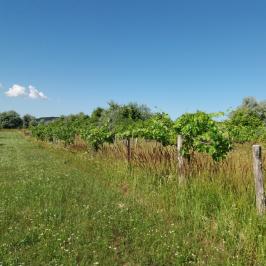Eladó  mezőgazdasági ingatlan (Budakeszi) 1,9 M  Ft
