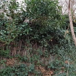 Eladó  panzió (Budakeszi, Virágvölgy) 299 M  Ft