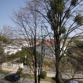 Eladó  panellakás (Budakeszi) 29,9 M  Ft