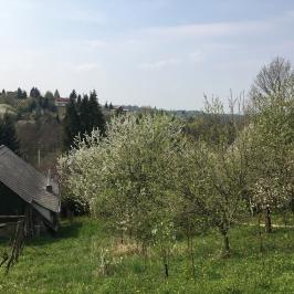 Eladó  mezőgazdasági ingatlan (Nagykanizsa, Látóhegy) 1,95 M  Ft