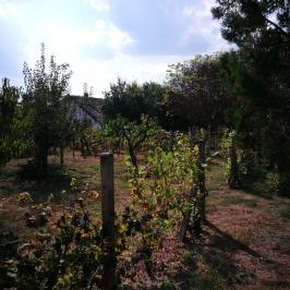 Eladó  nyaraló (Debrecen, Pac) 2,49 M  Ft