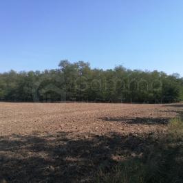 Eladó  mezőgazdasági ingatlan (Igrici) 14 M  Ft