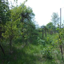 Eladó  mezőgazdasági ingatlan (Nyíregyháza, Oros) 1,85 M  Ft