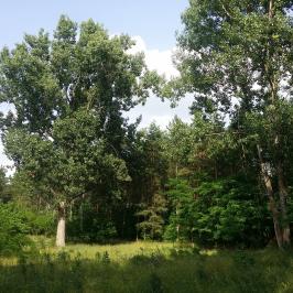 Eladó  tanya (Jászberény) 3,8 M  Ft