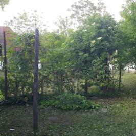 Eladó  családi ház (Hajós) 15,5 M  Ft