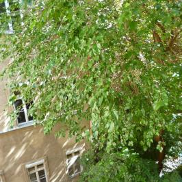 Eladó  téglalakás (<span class='notranslate'>Budapest, VII.  </span>kerület) 48,9 M   <span class='notranslate'>Ft</span>