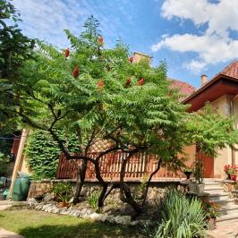 Eladó  családi ház (Budapest, XVII. kerület) 84,9 M  Ft