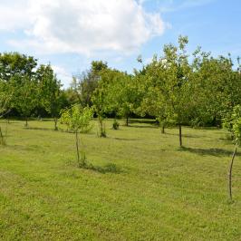 Eladó  mezőgazdasági ingatlan (Galambok) 5,5 M  Ft