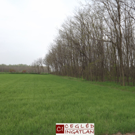 Eladó  mezőgazdasági ingatlan (Cegléd) 7 M  Ft