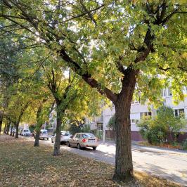 Eladó  téglalakás (Budapest, X. kerület) 29,9 M  Ft