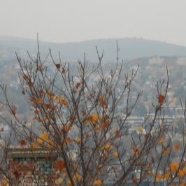 Kiadó  téglalakás (Budapest, XII. kerület) 220 E  Ft/hó