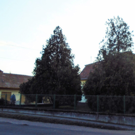 Eladó  családi ház (<span class='notranslate'>Szigetszentmárton</span>, <span class='notranslate'></span>) 53 M   <span class='notranslate'>Ft</span>