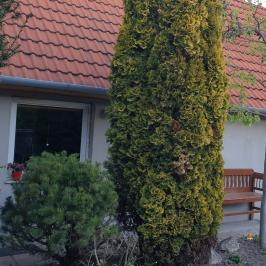 Eladó  családi ház (<span class='notranslate'>Dunaföldvár</span>, <span class='notranslate'></span>) 59,5 M   <span class='notranslate'>Ft</span>